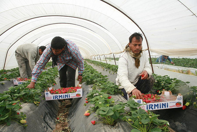 Strawberry pickers,  Noborder Network under Creative Commons license. Photo by indymedia athens.