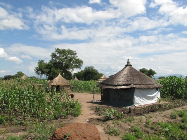 Houses built by South Sudanese refugees and agricultural production on their own land in Adjumani District, Uganda. (Photo credit: Luca Gefäller)