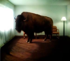 migration-bison